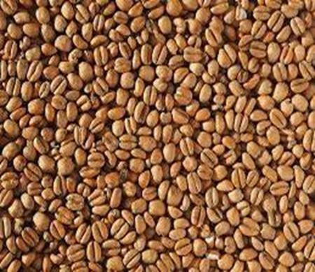 Bild für Kategorie Weizenmalz